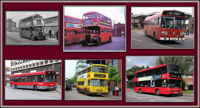 81 Bus Collage