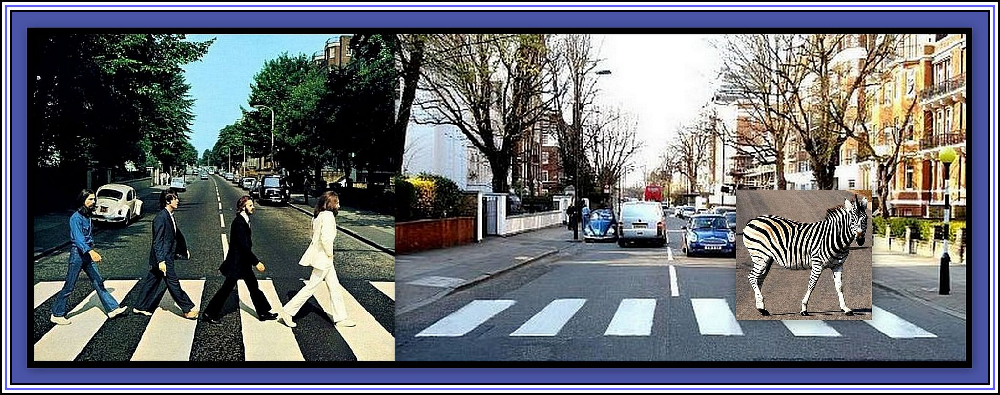 Abbey Road Zebra Collage