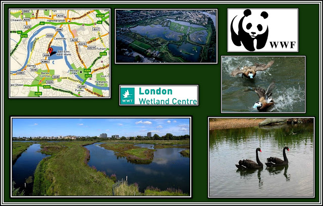 London Wetland Centre Collage