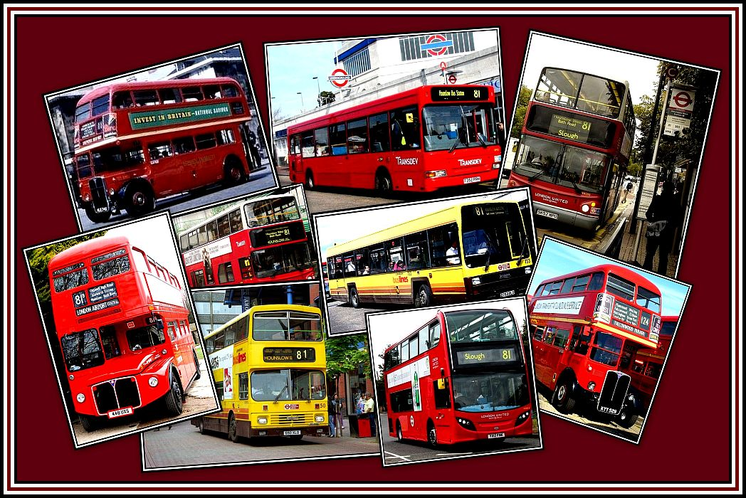 Buses on the 81 Collage