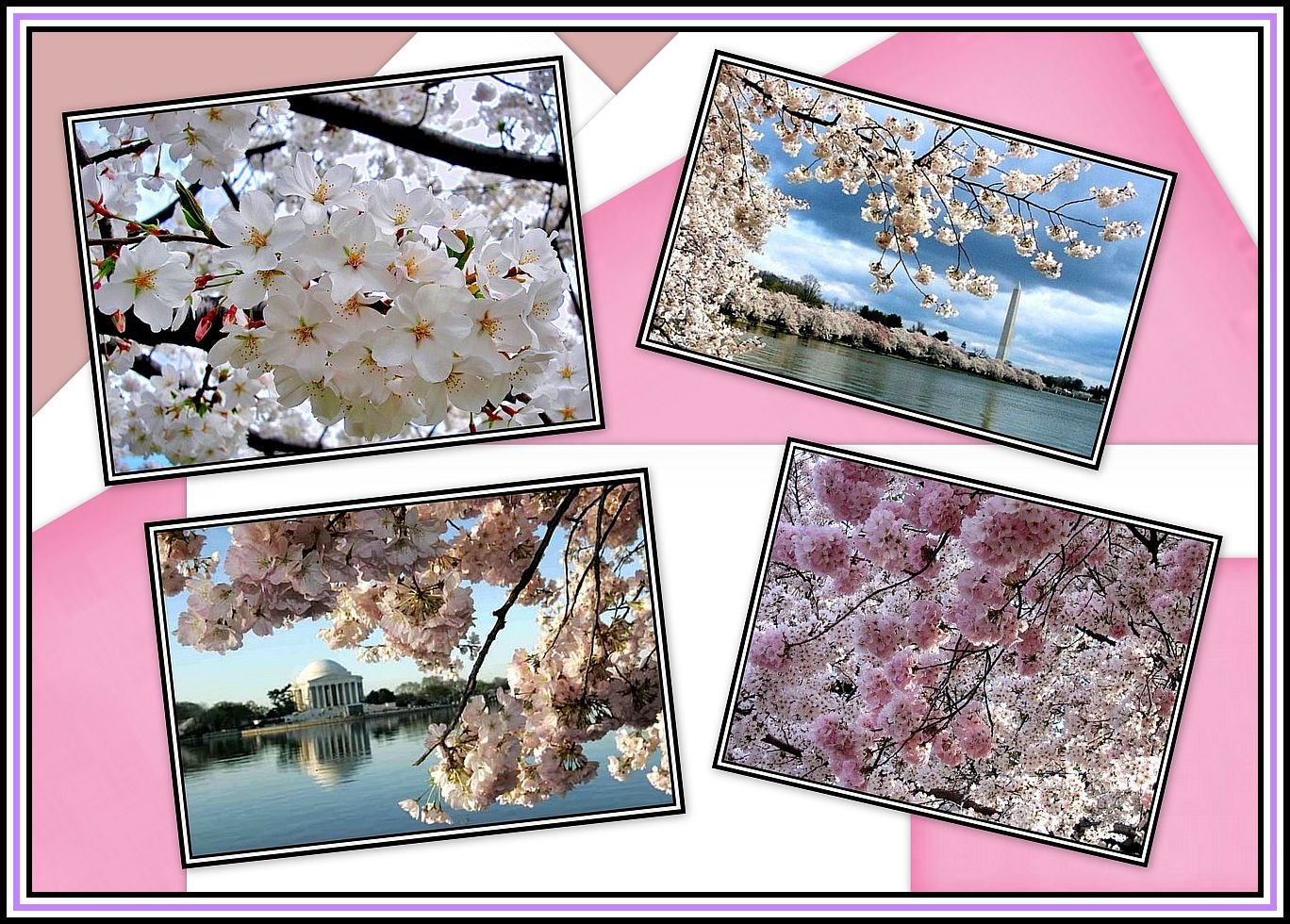 Tidal Basin Collage