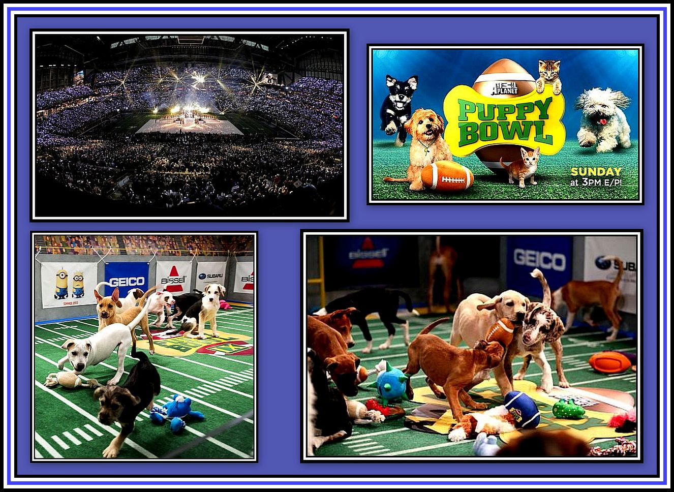 Puppy Bowl Collage