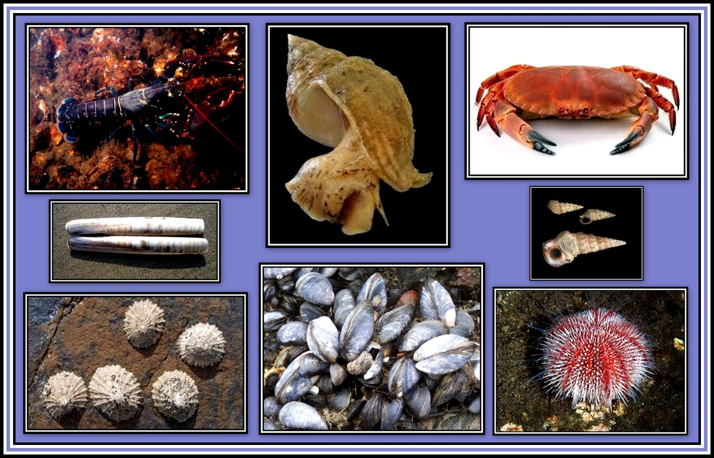 Animals of the Seashore Collage