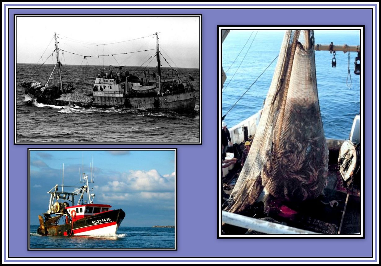 Trawlers and Trawl Collage
