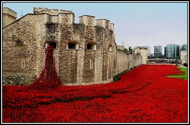 WWI-Poppies-Tower-London