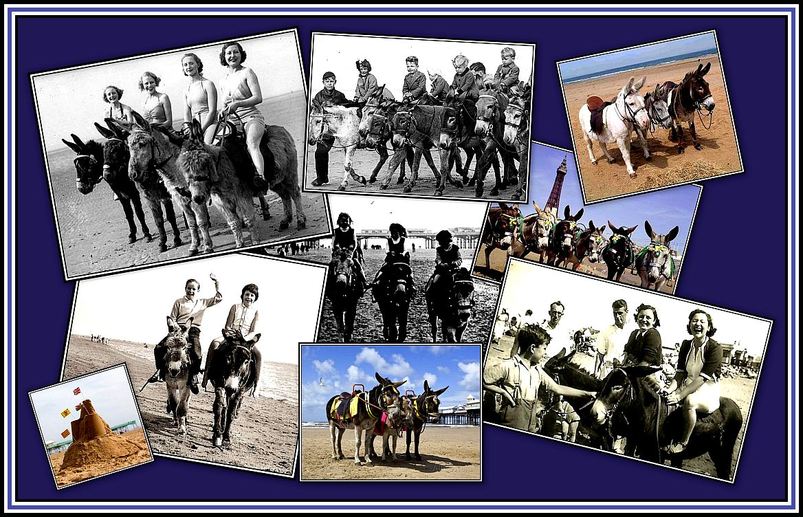 Blackpool Donkeys Collage